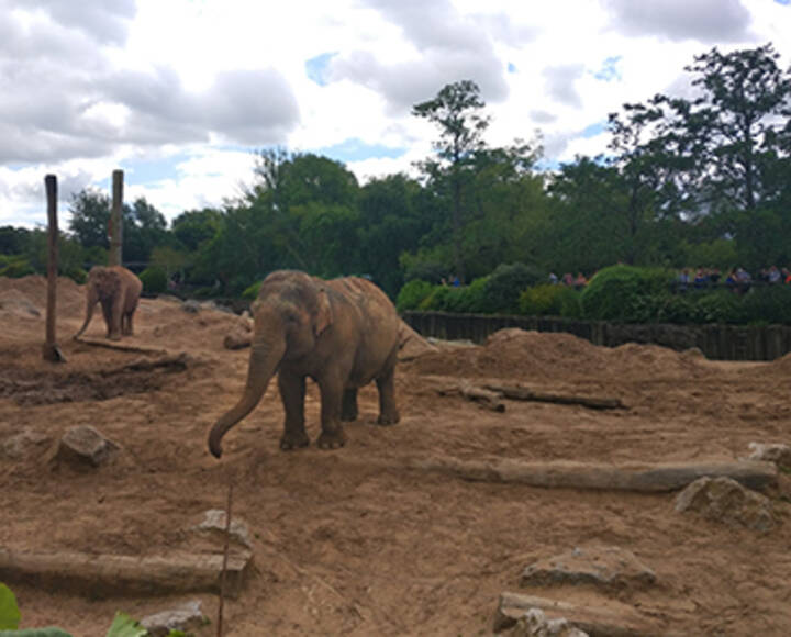 Supported Families visit Chester Zoo